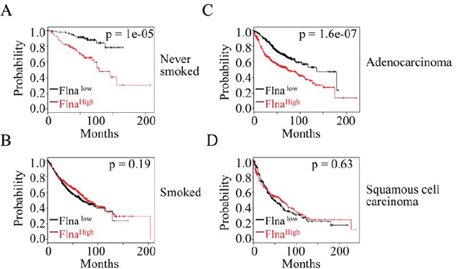 The expression level of filamin A is a prognostic factor for the lung cancer patients.