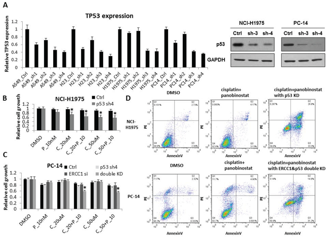 p53 contributes to increased sensitivity to cisplatin combined with panobinostat.