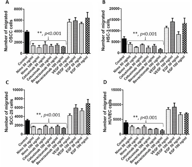 Cell migration assay was performed to understand the anti-angiogenic effects of EGFR inhibitors, nimotuzumab and cetuximab in OSCC A. HSC-3 B., SCC-25 C. and HUVEC D. cells.