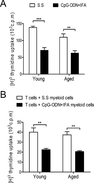 Myeloid cells from aged CpG-ODN+IFA-treated mice suppress T cell proliferation.