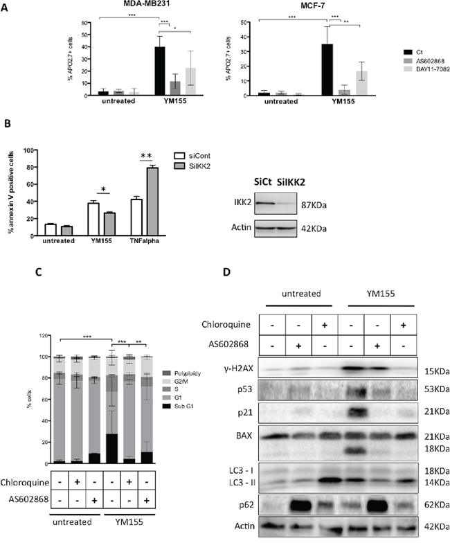 IKK2 contributes to YM155-induced cell death.
