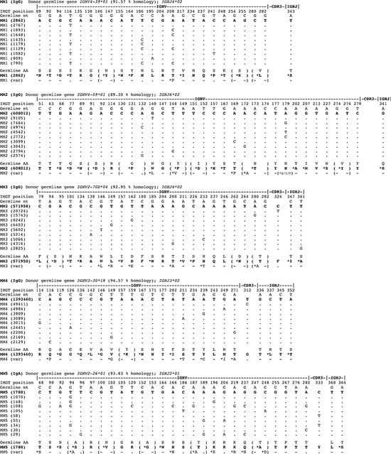 Marked intraclonal variation in tumor-derived IGHV gene sequences in MM.