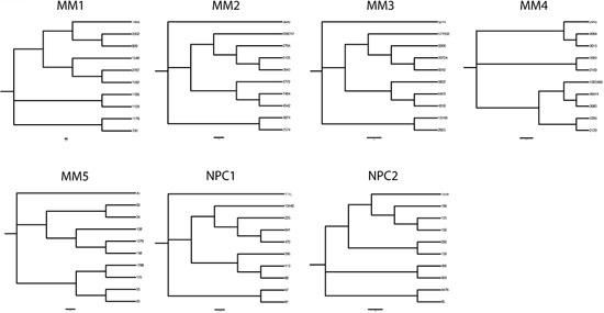 Phylogenetic trees delineating hierarchical derivation of clonally related IGHV gene sequences in MM and in normal plasma cells in the bone marrow.