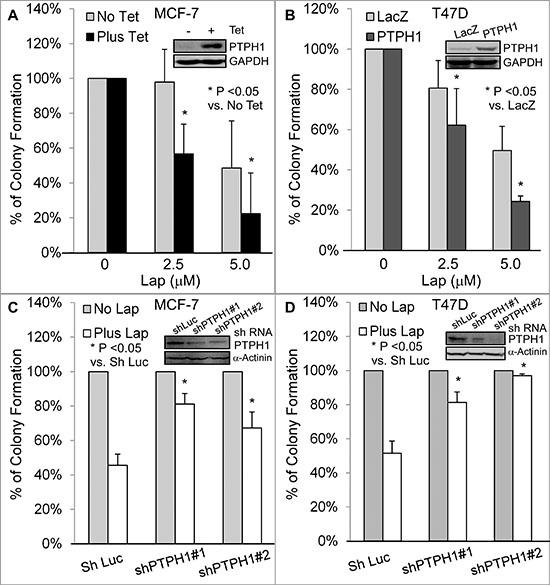 PTPH1 confers breast cancer cell sensitivity to lapatinib (Lap).
