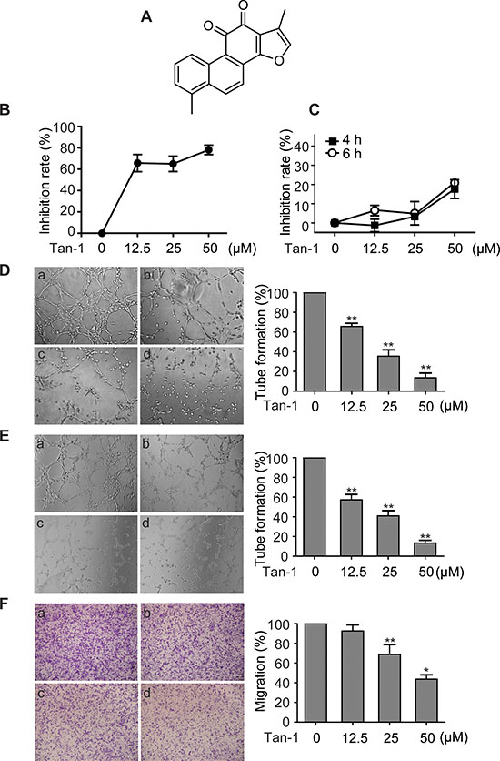 Tanshinone-1 (Tan-1) inhibits the tube formation and migration of endothelial cells.