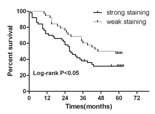 Kaplan-Meier survival curves in gastric carcinoma according to ERp19 staining.