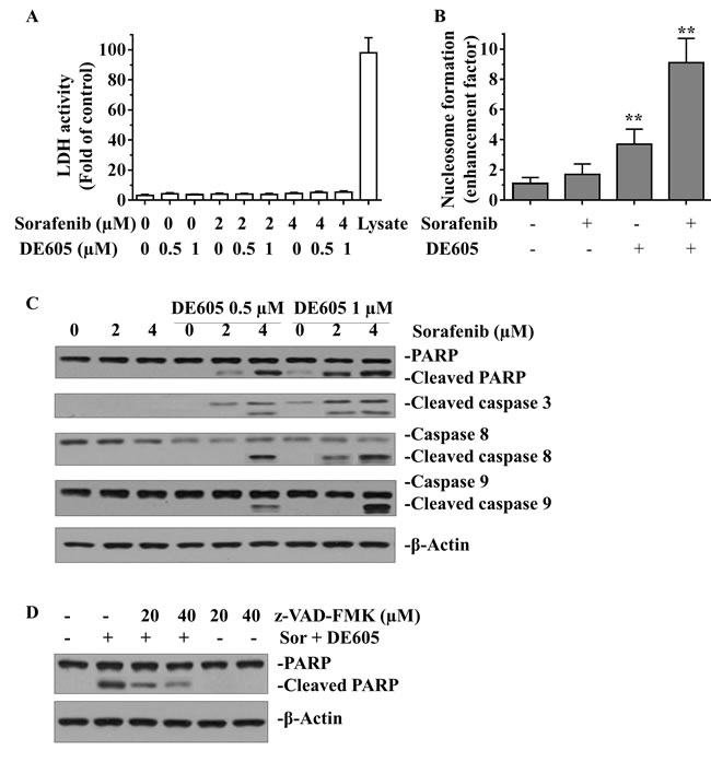 Effect of sorafenib plus DE605 on LDH activity, nucleosome formation and the apoptosis-related proteins in PLC/PRF/5 cells.