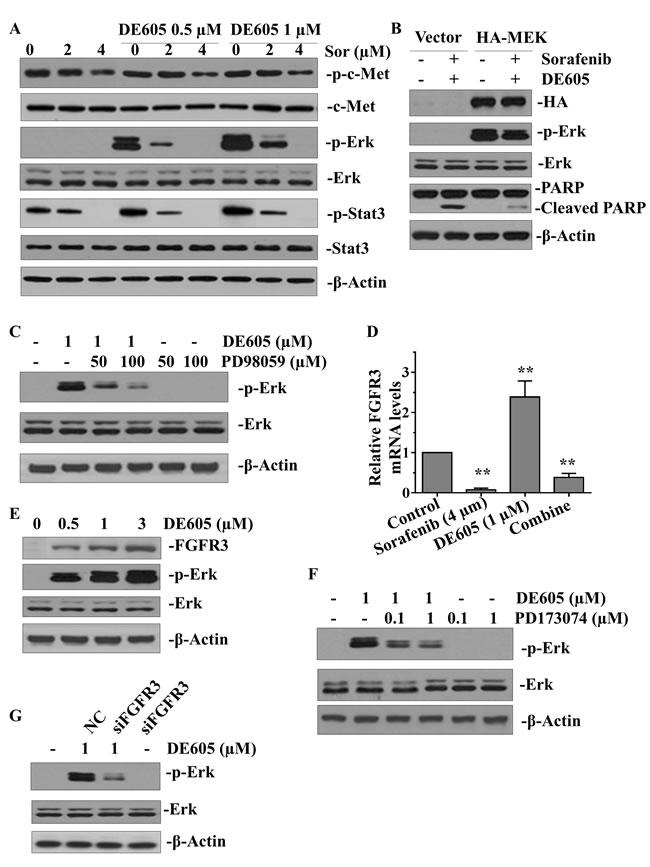 Effects of sorafenib plus DE605 on multiple signaling pathways in PLC/PRF/5 cells.