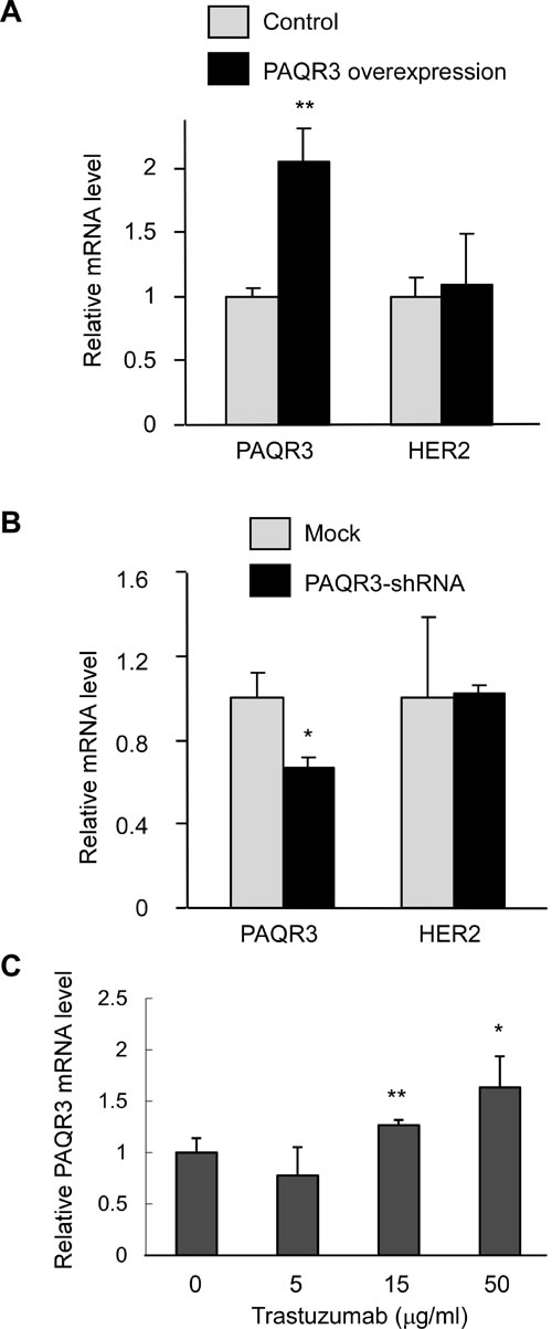 Inhibition of HER2 elevates PAQR3 expression in SKBR3 cells.
