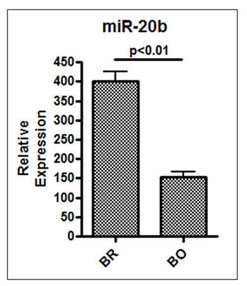 Relative expression of miR-20b in brain vs.