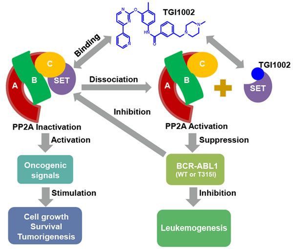 Proposed mechanism of action of TGI1002.