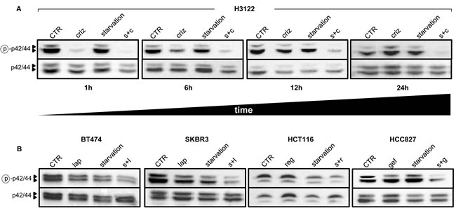 Starvation conditions enhance TKI-mediated inhibition of MAPK signaling.