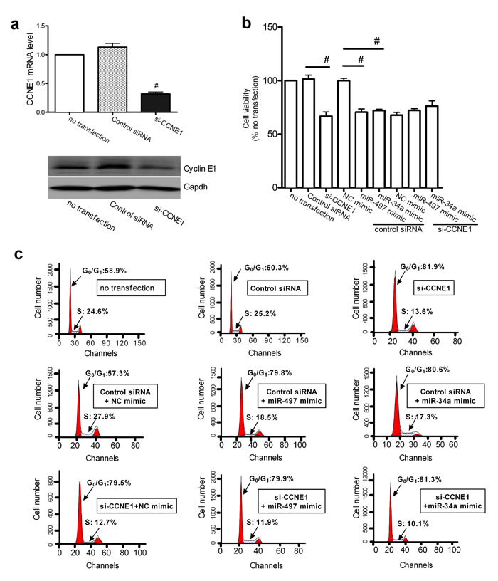 CCNE1 knockdown affected the miR-497 and miR-34a induced inhibition of proliferation.