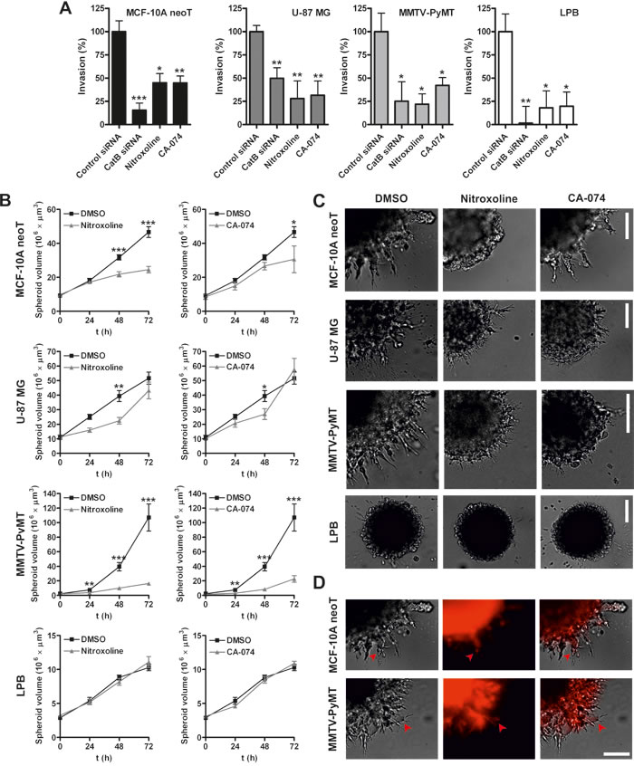Nitroxoline impairs invasion of transformed and tumor cells.