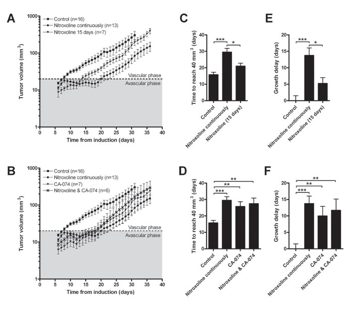 Nitroxoline reduces tumor growth in a LPB mouse tumor model.