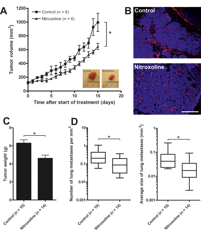 Nitroxoline attenuates tumor growth, metastasis and angiogenesis in MMTV-PyMT mouse breast cancer model.