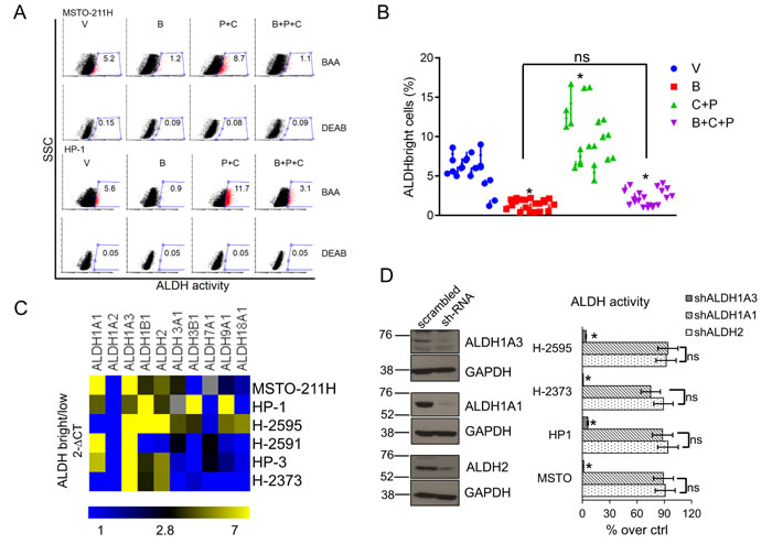 Butein affects the survival of MPM chemoresistant cell subpopulations (ALDH