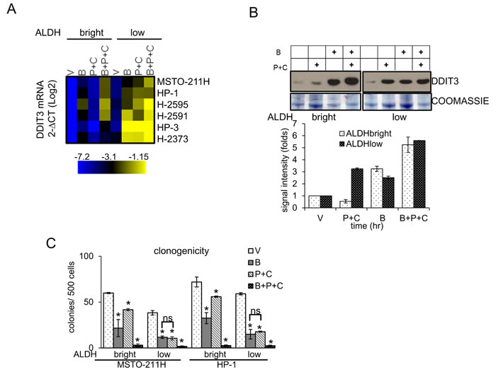 Butein unlocks the repression of DDIT3mRNA in the chemoresistant ALDH