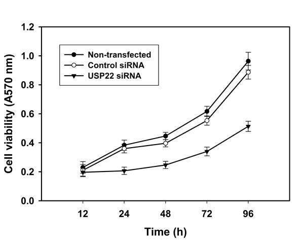 USP22 gene silencing inhibits HCC cell growth.
