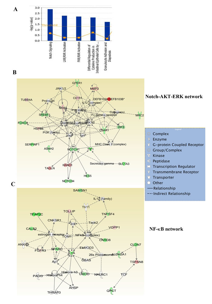 Ingenuity pathway analysis of genes differentially expressed in ADMD-231 cells.