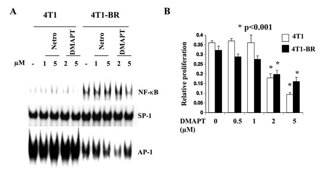 4T1-BR cells displayed elevated NF-κB activity compared with 4T1 cells.