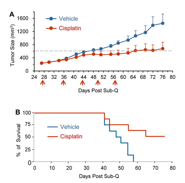 Cisplatin suppresses primary tumor growth and extends survival time of GA0087 mice.