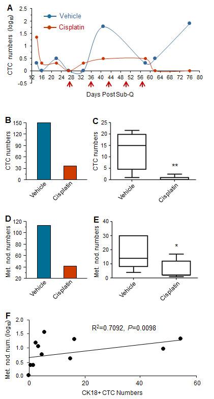 Cisplatin suppresses tumor metastases in GA0087 mice.