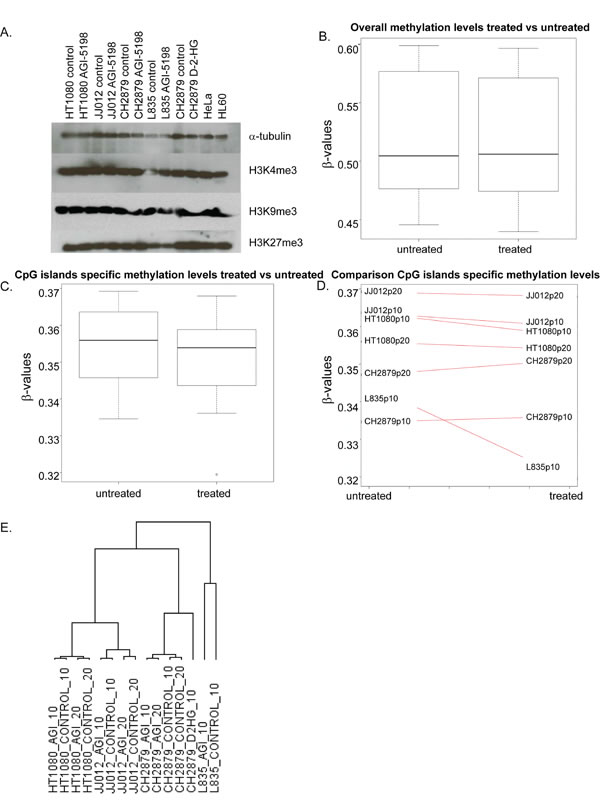 The effect of long term mutant IDH1 inhibition on histone and DNA methylation and gene expression.