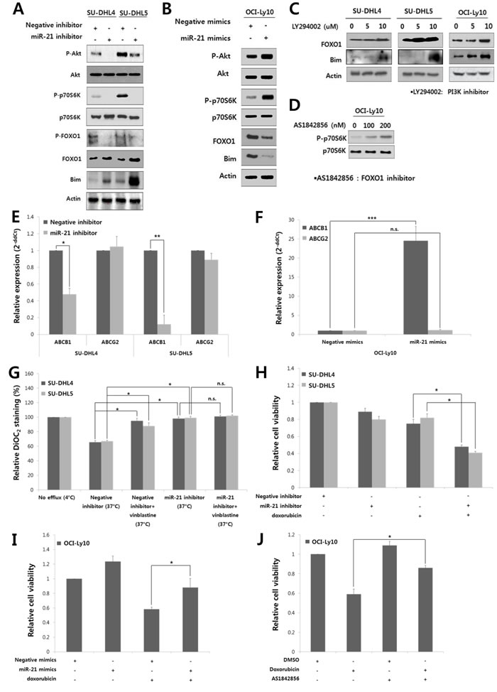 MiR-21 regulates the PI3K/AKT/mTOR/FOXO1 pathway and involved in the drug resistance and proliferation of DLBCL cells.