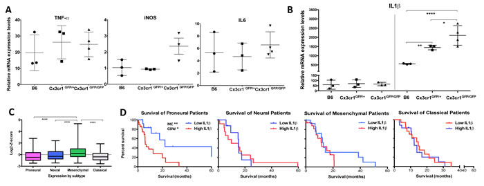 Loss of Cx3cr1 results in a dose-dependent increase in IL1β expression by CX3CR1-positive cells.