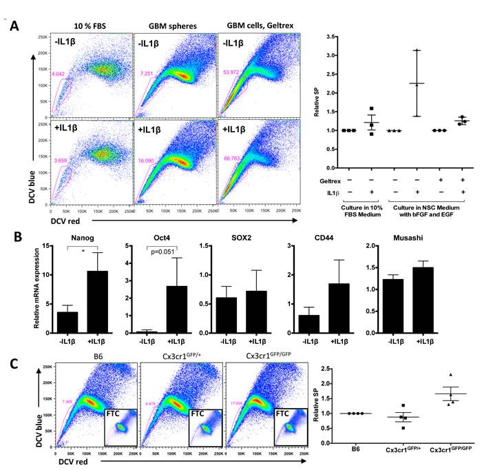 IL1β treatment enhances a stem cell phenotype