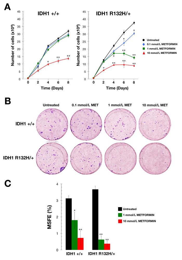 Metformin-hypersensitive phenotype of IDH1 mutant cells.