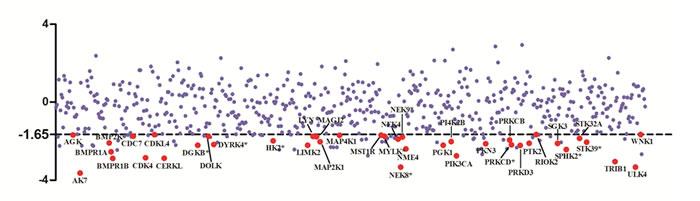 Scatter plot of z score from RNAi screen.