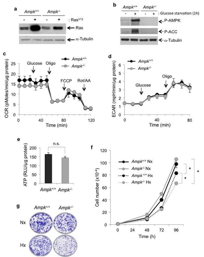 Metabolic characterization