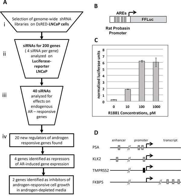 Validation of shRNA library selection procedure.