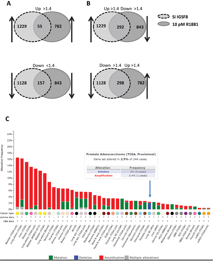 Comparison of gene expression affected by IGSF8 knockdown or androgen stimulation.