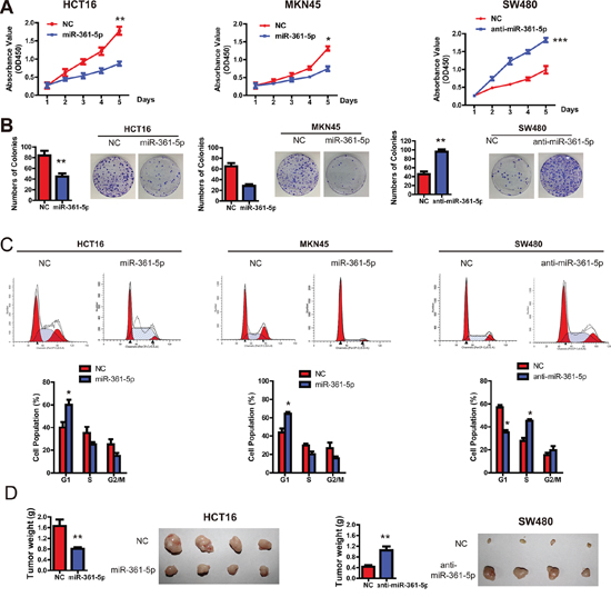 miR-361-5p suppresses CRC and GC cell growth in vitro and in vivo.