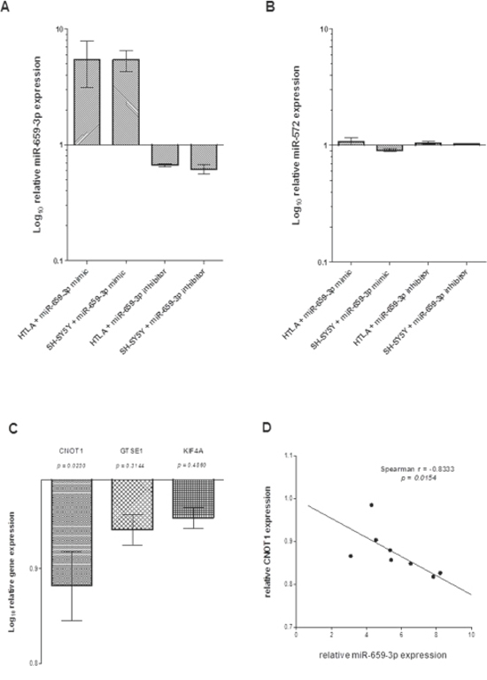(A) Expression of miR-659-3p, (B) miR-572, (C) CNOT1, GSTE1 and KIF4A and (D) inverse correlation between miR-659-3p and CNOT1 expression in HTLA-230 and SH-SY5Y cells treated with miR-659-3p mimic and inhibitor.