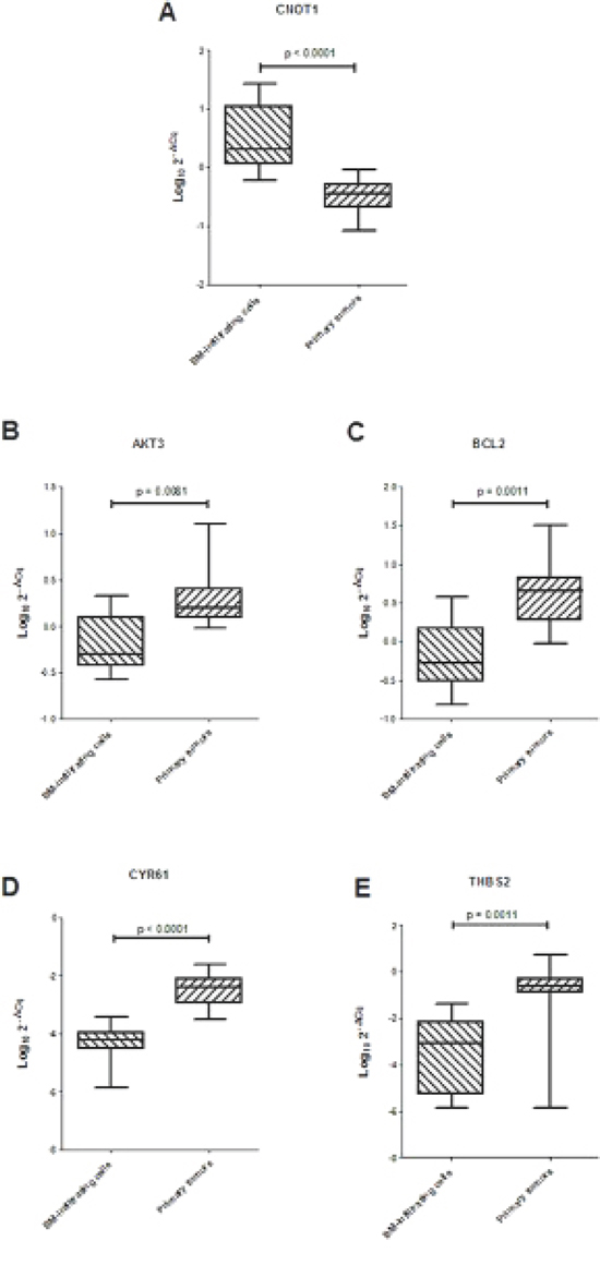 (A) Expression levels of CNOT1 and (B–E) ARE-sequence containing genes involved in focal adhesion pathway in 10 BM-infiltrating and 10 primary tumors.