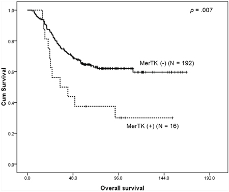 Kaplan-Meier survival curve for overall survival according to the MerTK status demonstrates that patients with MerTK overexpressing tumors have a worse outcome.