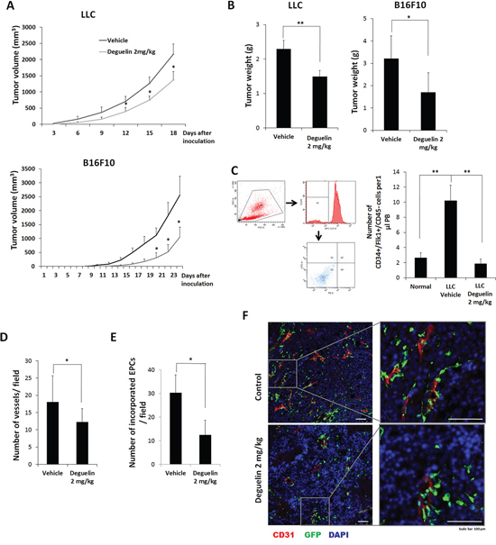 Effect of deguelin on tumor growth and vasculogenesis in vivo.