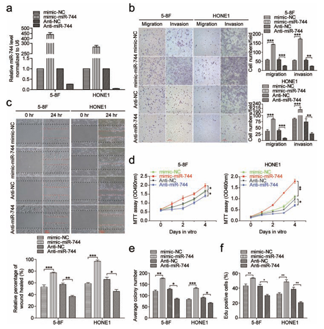 MiR-744 promotes NPC cells migration, invasion and proliferation in vitro.