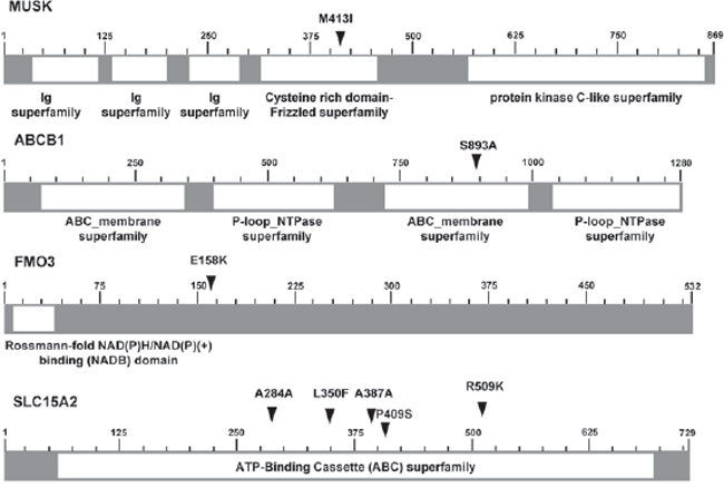 Schematics of six non-synonymous SNVs located in 4 genes.