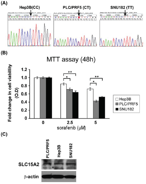 Functional analysis of SLC15A2 variant in liver cancer cell lines.
