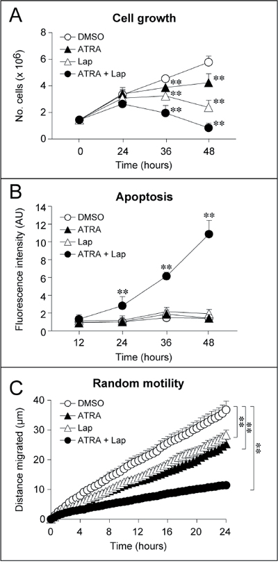 Effect of ATRA and Lapatinib alone or in combination on the growth, apoptotic response and motility of SKBR3 cells.