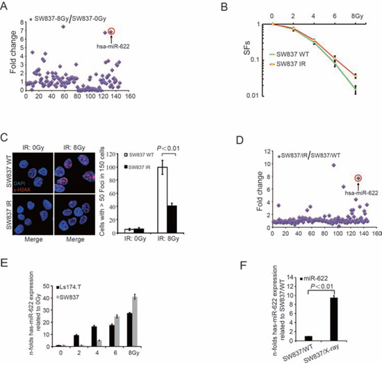 MiR-622 is induced by IR and maintained in surviving cells.