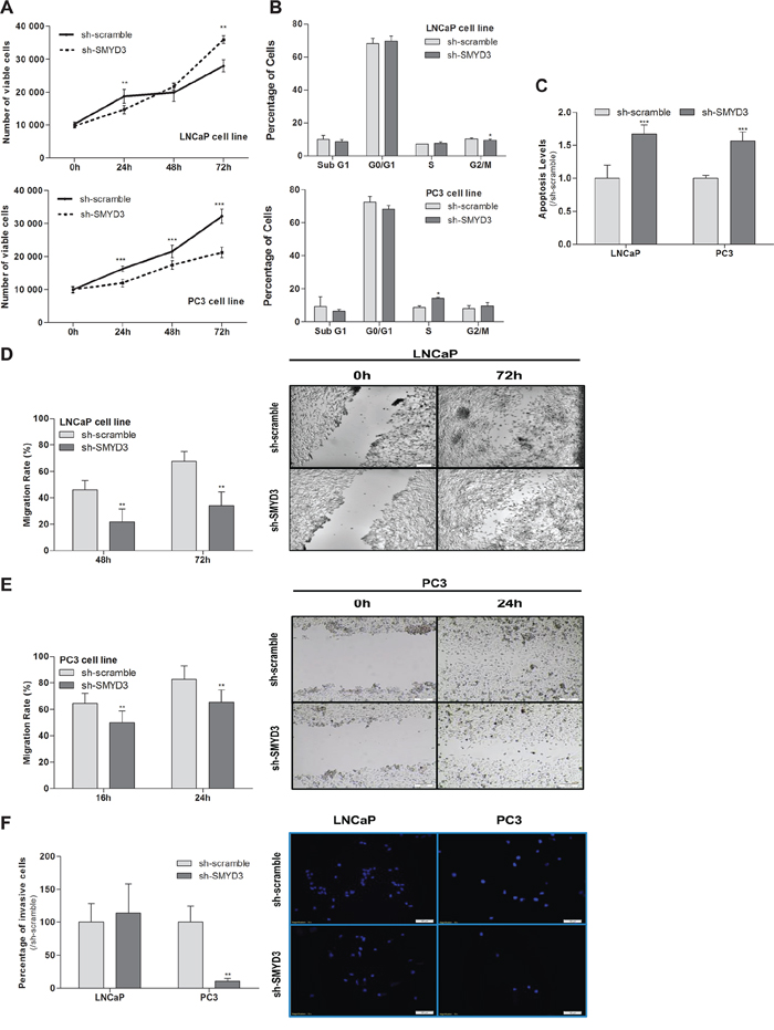 Impact of SMYD3 silencing in the malignant phenotype of PCa cells.