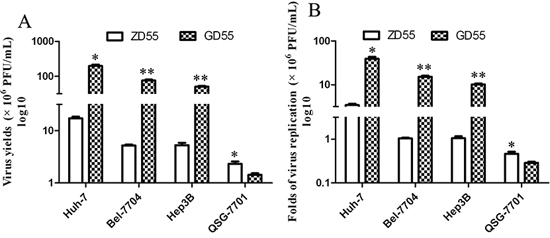 Replication of GD55 and ZD55 in hepatocarcinoma cells.