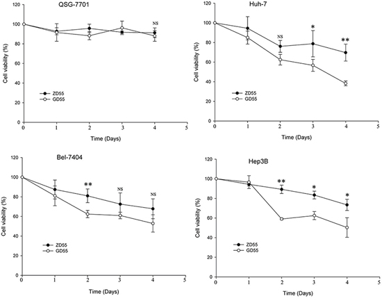 Cell viability of time-dependent by GOLPH2 promoter-regulated oncolytic adenovirus GD55.