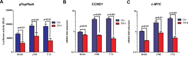 TFF1 abrogates H. pylori-induced transcriptional activation of β-catenin and its target genes mRNA expression.